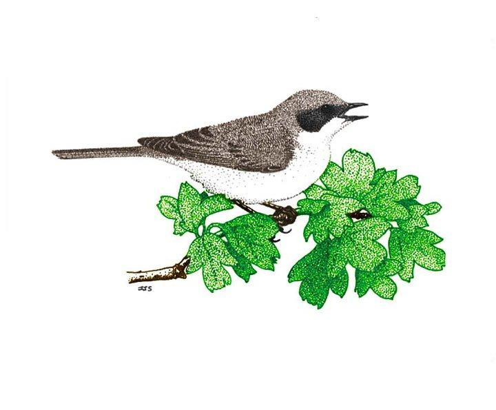 paisley-natural-history